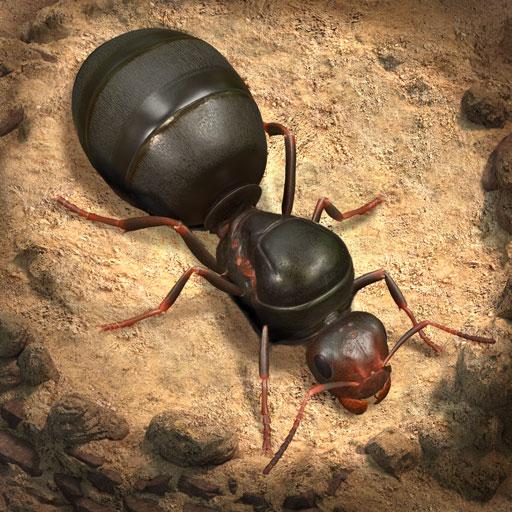 The Ants Apk İndir